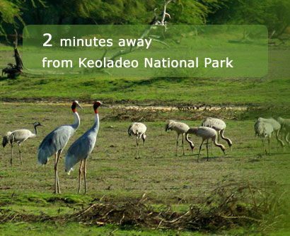 Bharatpur Tour, Keoladeo National Park Tour, Wildlife Resorts Bharatpur, Bharatpur Jungle Resorts